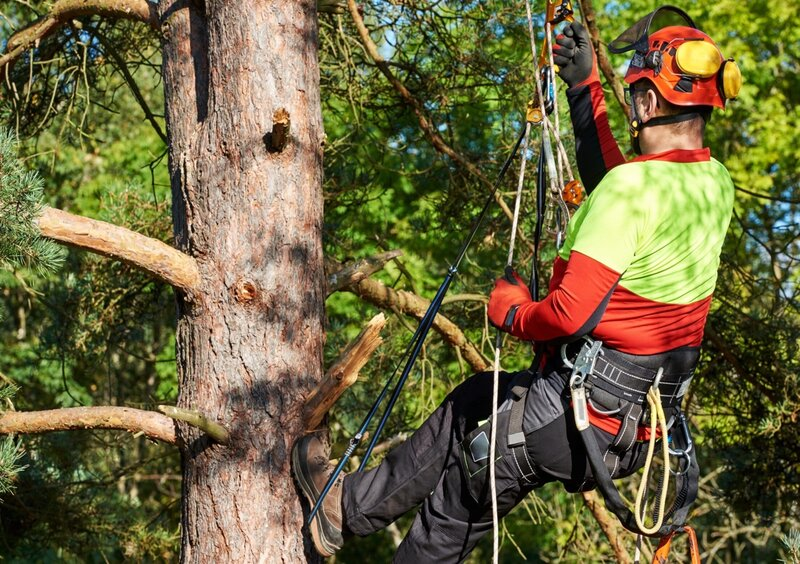 AHCARB302 Inspect trees for access and work