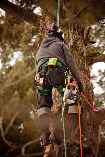 Arborist climbing